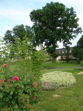 Galeria Ogród ziołowy