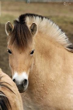 Galeria Konie